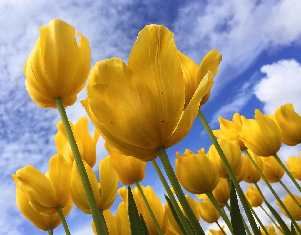 Blumen vor blauen Himmel